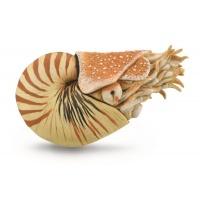 Наутилус помпилиус моллюск CollectA 88907